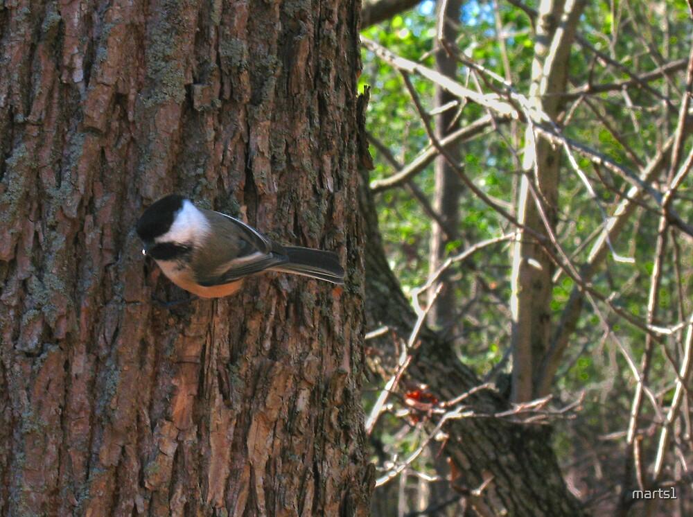 Here birdie 2 by marts1