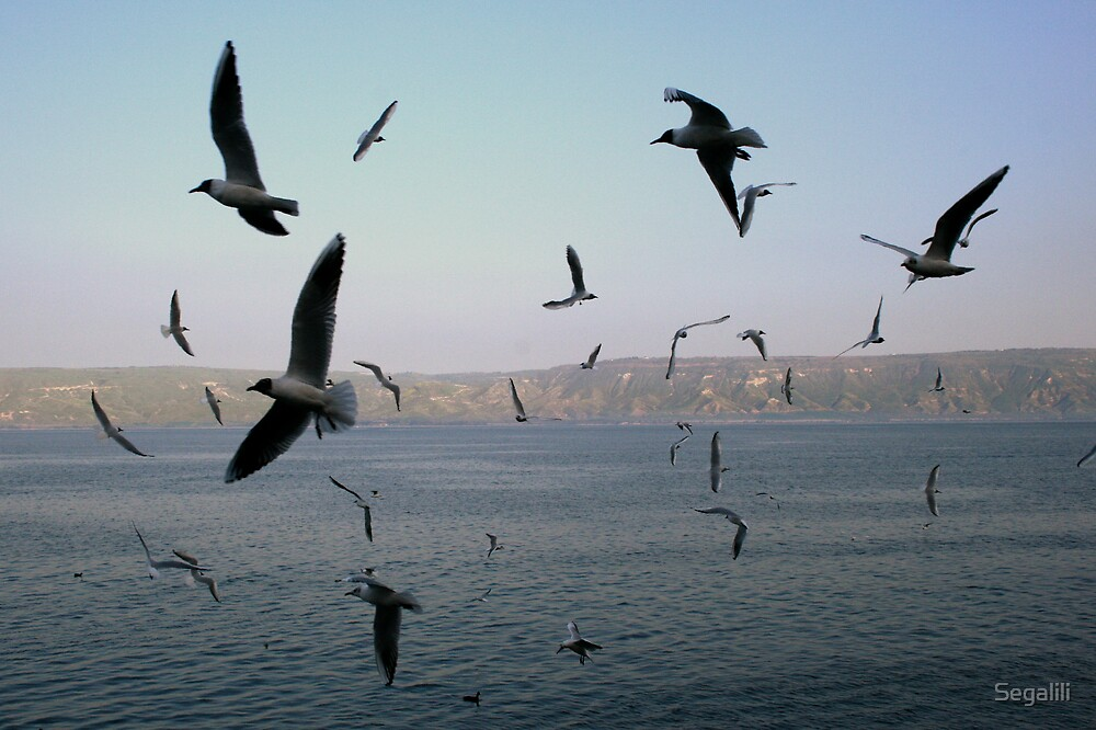 The Seagulls Show  by Segalili
