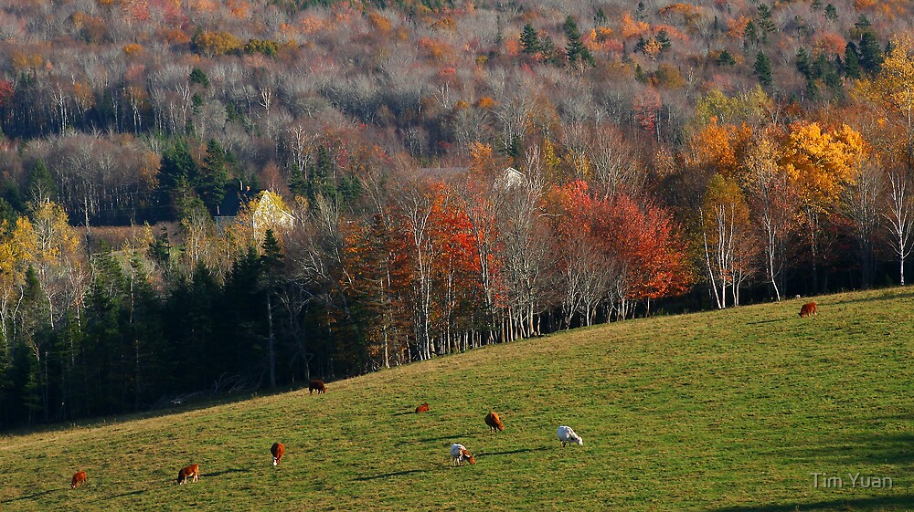 Fall Countryside by Tim Yuan