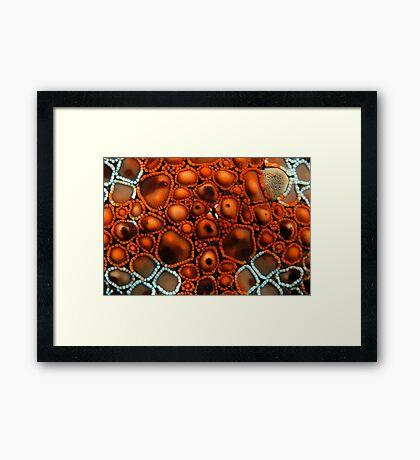 Star Surface Framed Print