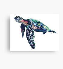 NOT A NINJA TURTLE Canvas Print