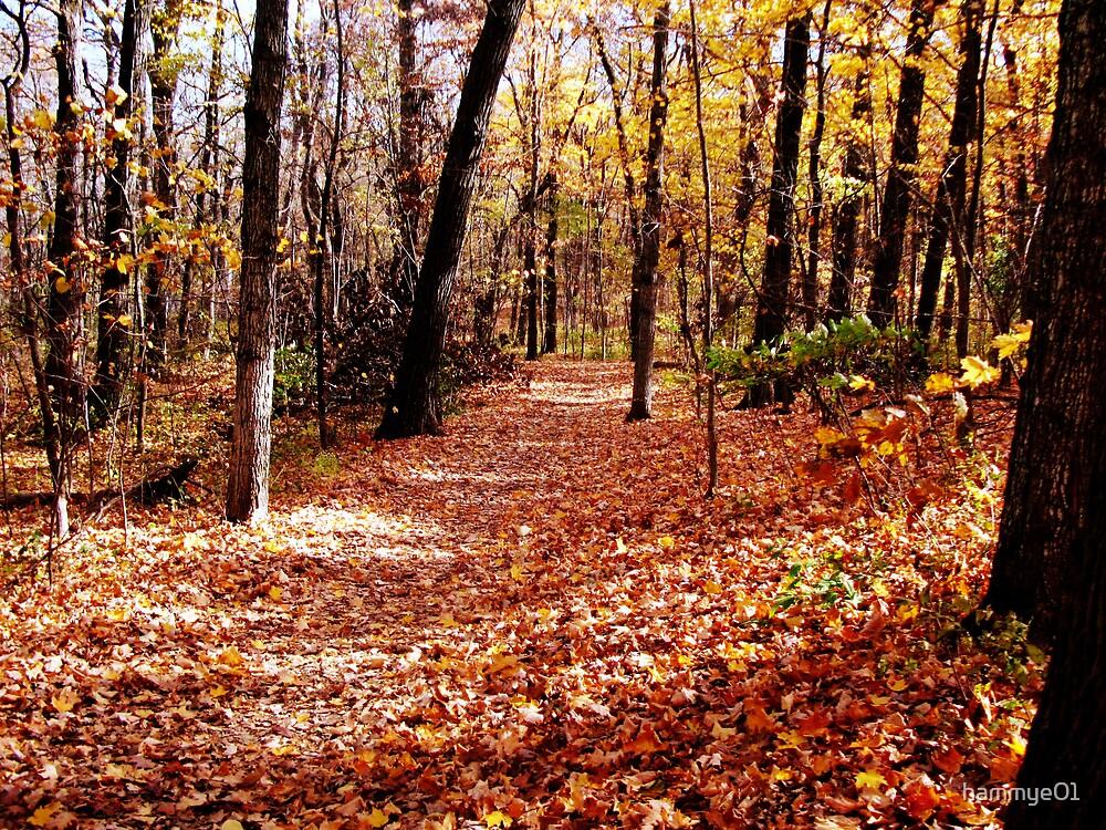Autumn Trail by hammye01