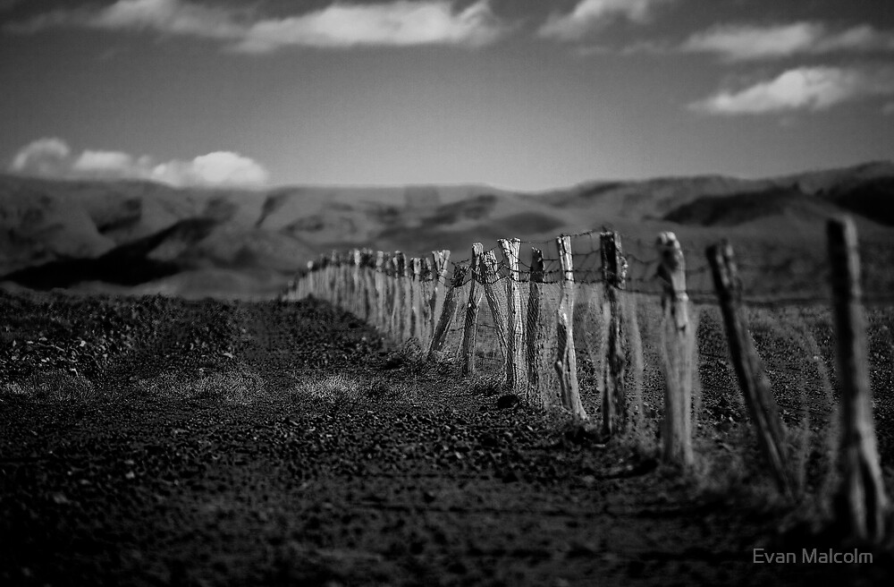 Flinders Fence by Evan Malcolm