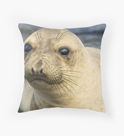 Northern Female Elephant Seal Throw Pillow