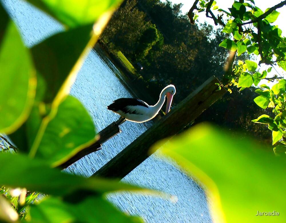 Angled Pelican by Jaroadie