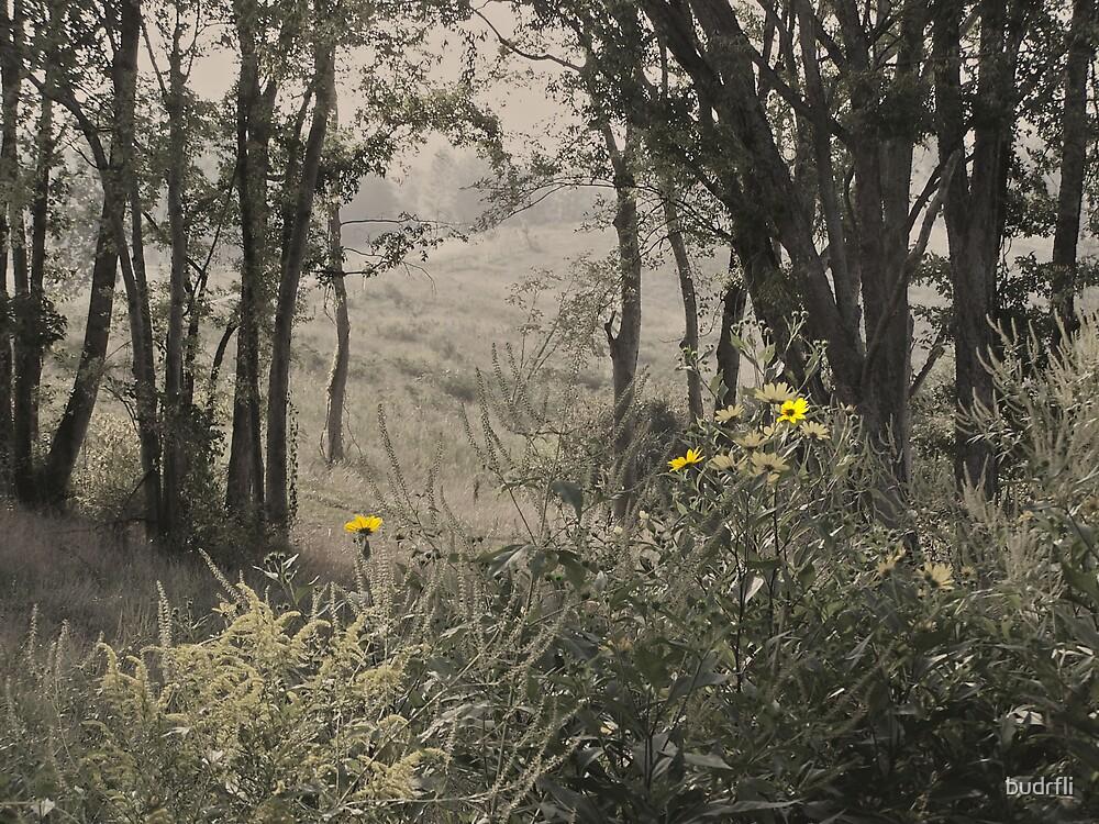 peaking field by budrfli
