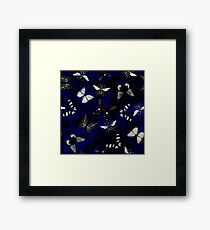 Insect butterfly Framed Print