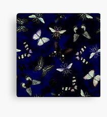 Insect butterfly Canvas Print
