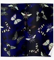 Insect butterfly Poster