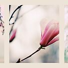 Spring Blossom Triptych by Jessica Jenney