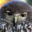 Barking Owl by Lance Leopold