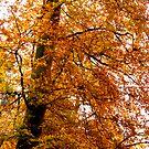 Autumn's Best by Chris Clark