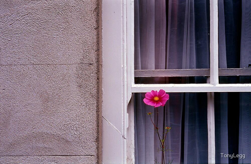Window dressing  by TonyLegg