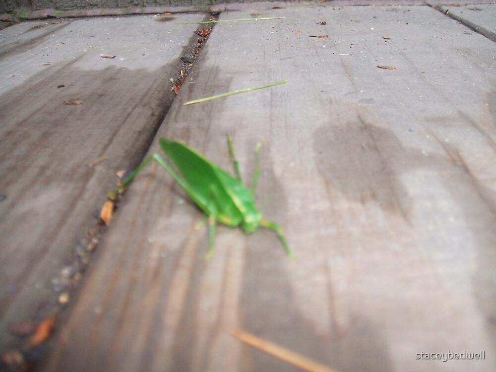 cricket by staceybedwell