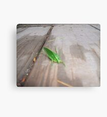cricket Canvas Print
