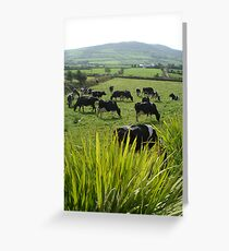 Cows of Kerry Greeting Card