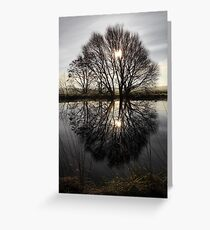 Tree Highlights Greeting Card