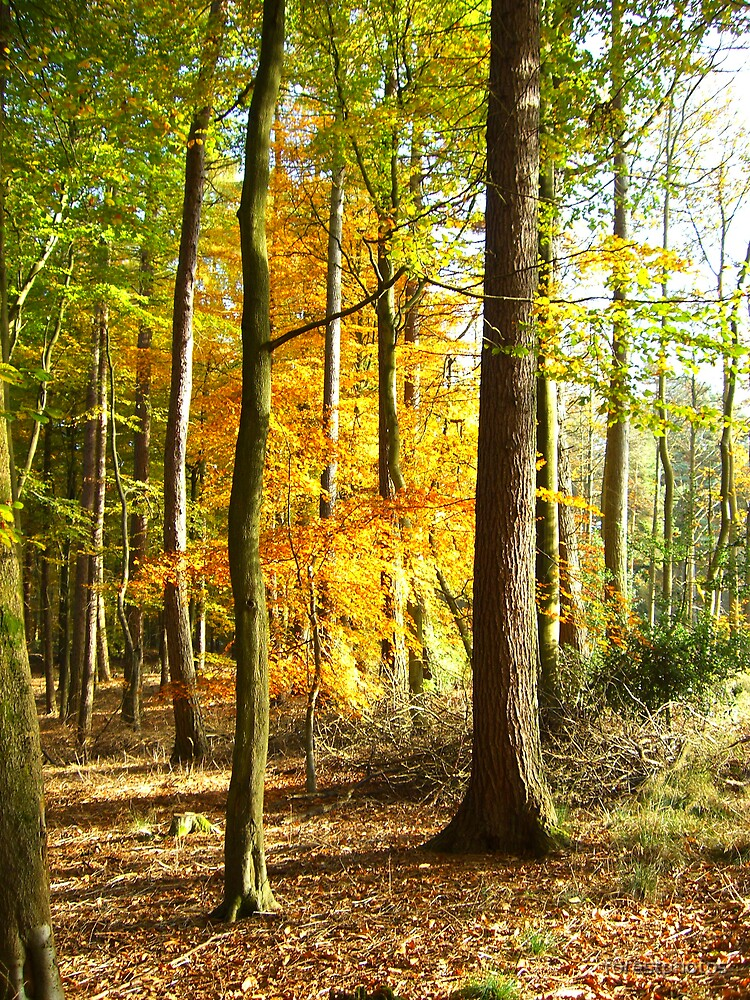 Autum Trees by forestphotos
