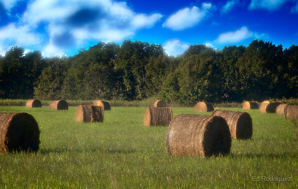 Roll Hay by Ed Rodriguez