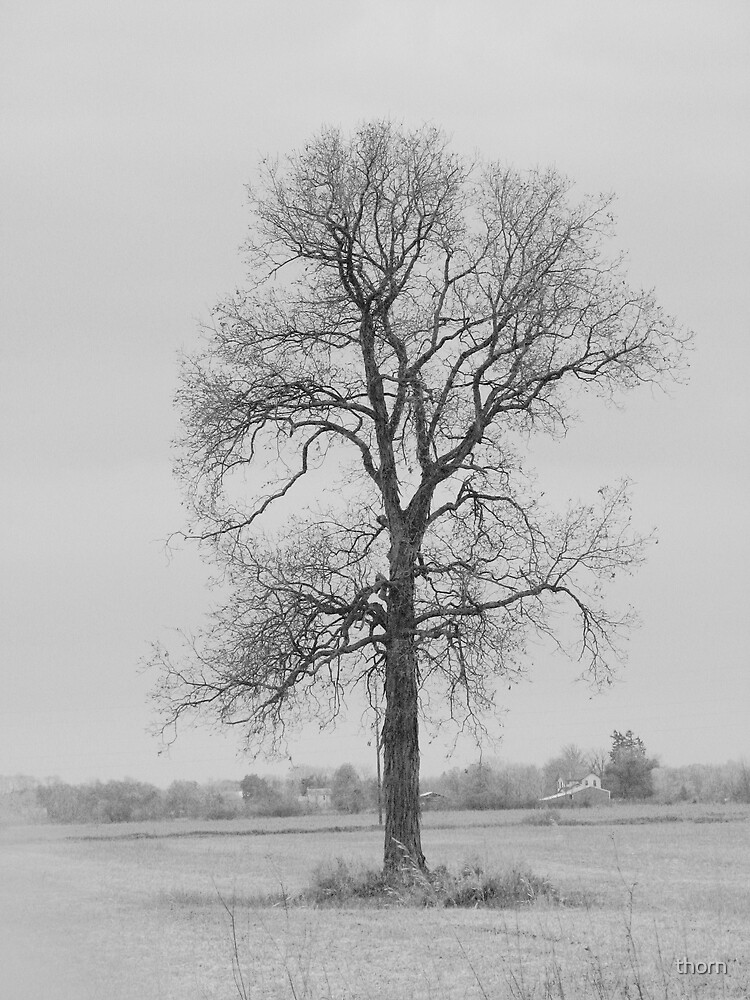 Lone Tree by thorn