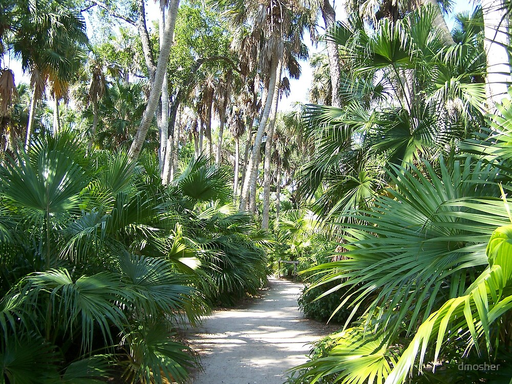 Tropical Trail by dmosher