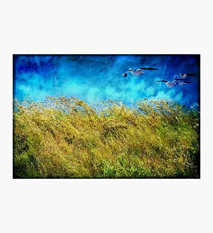 I feel the wind Photographic Print