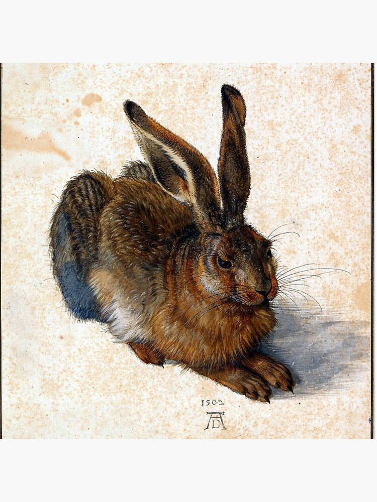 Albrecht Durer Young Hare by pdgraphics