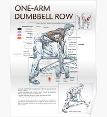 One Arm Dumbbell Row - Exercise Muscle Diagram Poster
