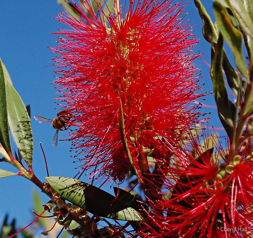Bee acrobat. by Cheryl Hall