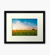Green rice fild with evening sky Framed Print