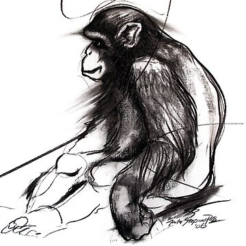 chimpanzee by anarte