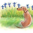 Art of Dachshund - Dachshund Lover - Spring Day by dvampyrelestat