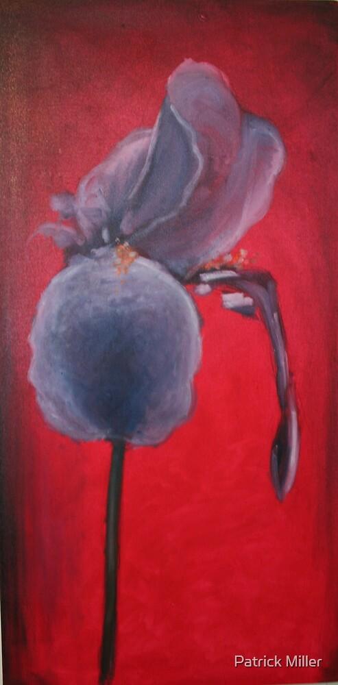 Bearded Iris by Patrick Miller
