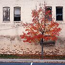 Urban Autumn by mymamiya
