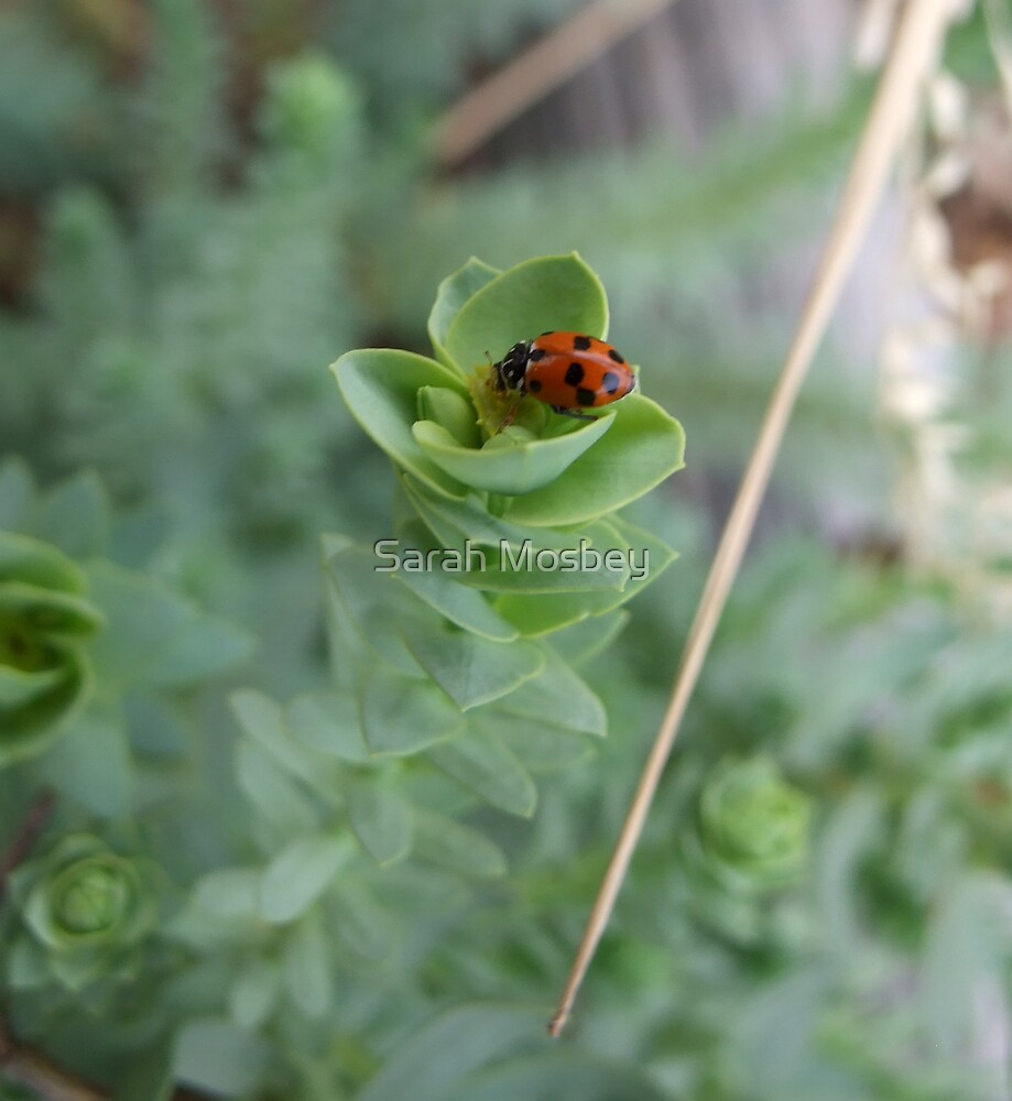 Mrs. Ladybird goes to the market by Sarah Mosbey