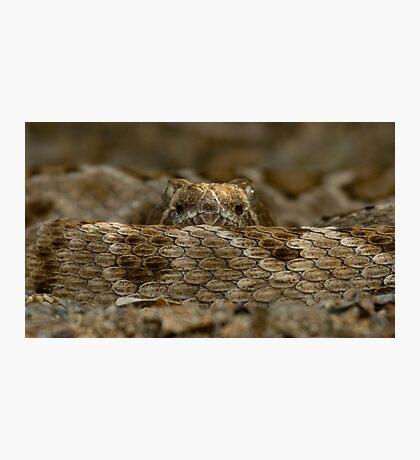 Rattleless Rattlesnake! Photographic Print
