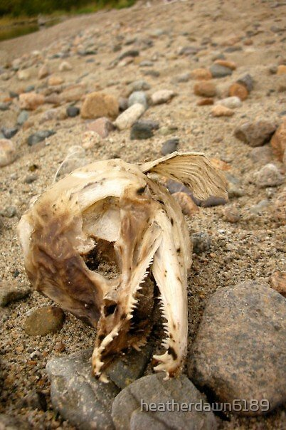 Forgotten Fish by heatherdawn6189