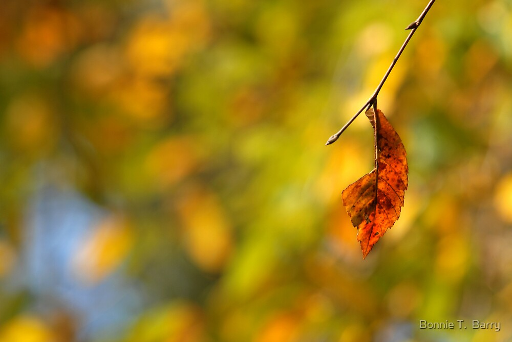Leaf by Bonnie T.  Barry