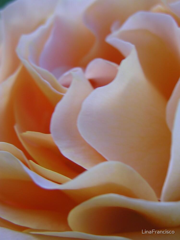 Soft Pink Rose by LinaFrancisco