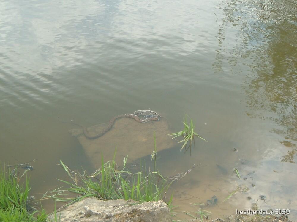 Pond Snakes by heatherdawn6189