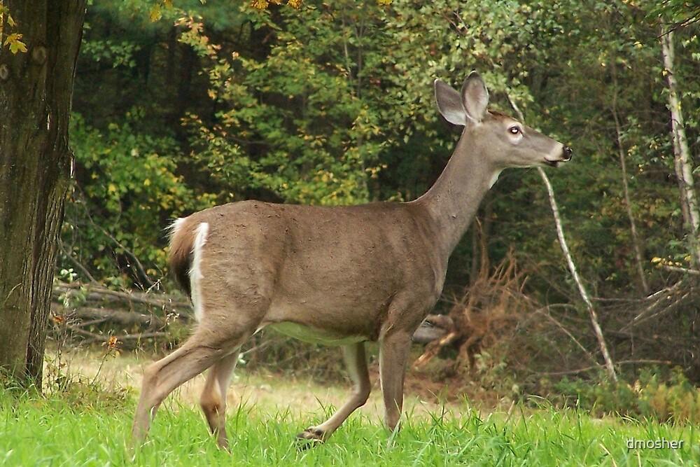Oh.........Deer by dmosher