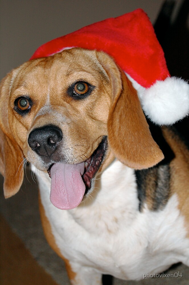 A Beagle Christmas by photovixen04