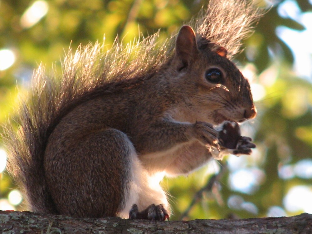 Squirrel by Jared Thomas