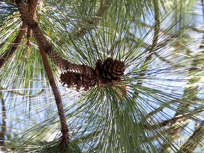 Pine Cone in the Sky by DianHeisey