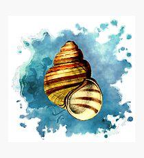 Seashell Art (1 of 3) Photographic Print