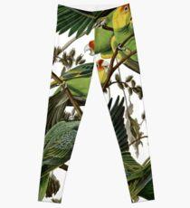 Audubon's Carolina Parakeet Leggings