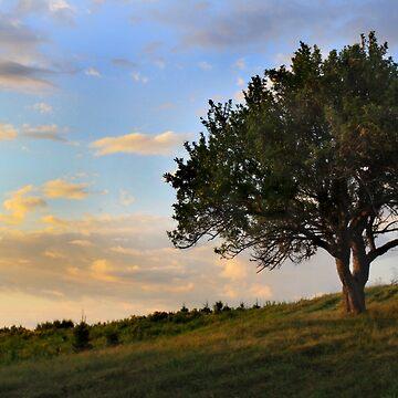 Tree by Loritaylor