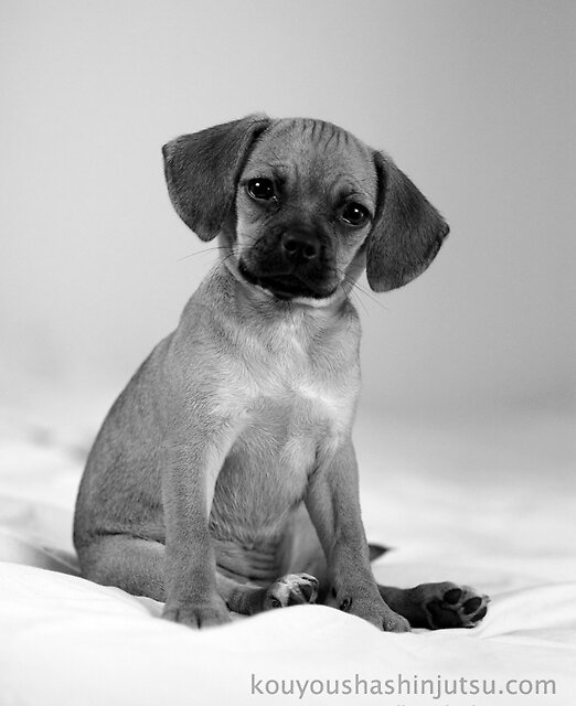 puppy 2 by redleafphotography
