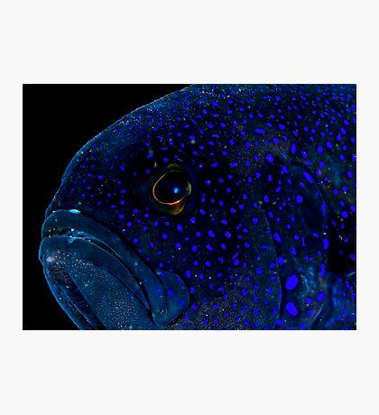 Blue Devil Photographic Print