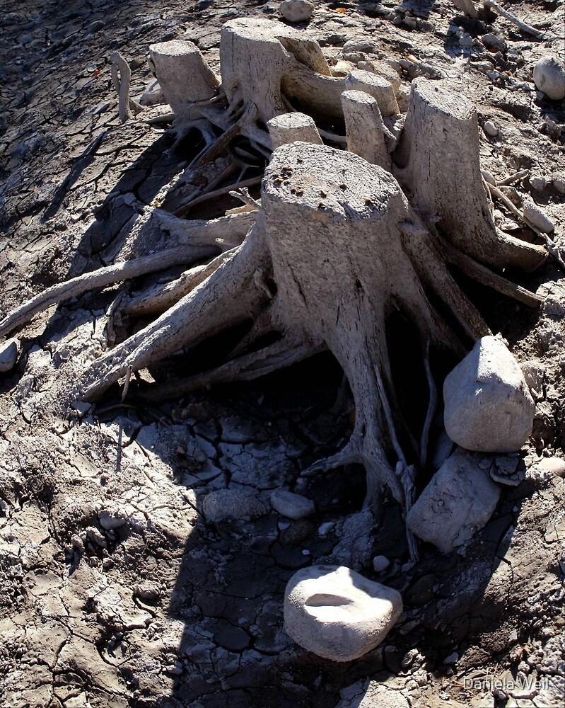 Drought by Daniela Weil